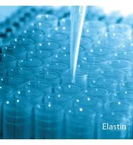 Elastin Serum